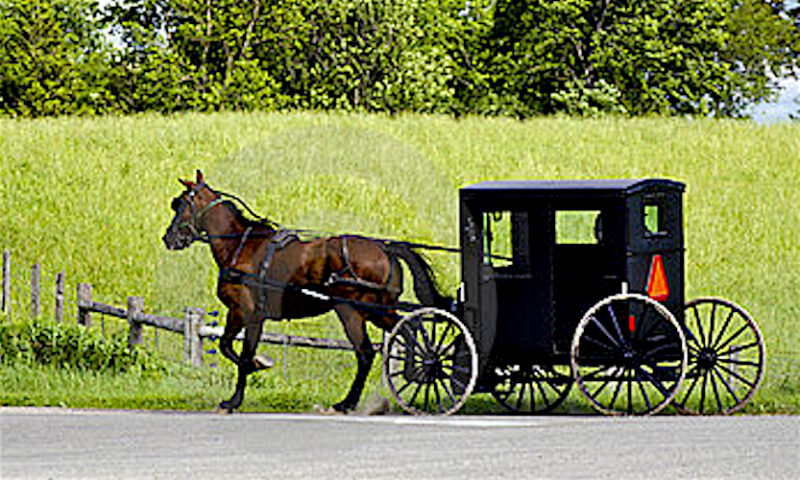 amish-buggy-black-horse