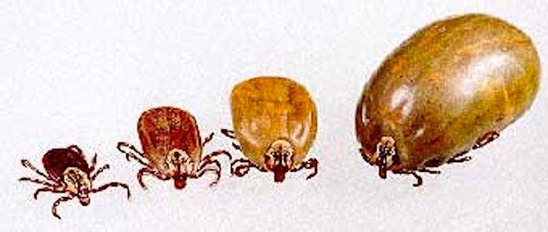 Poly Ticks
